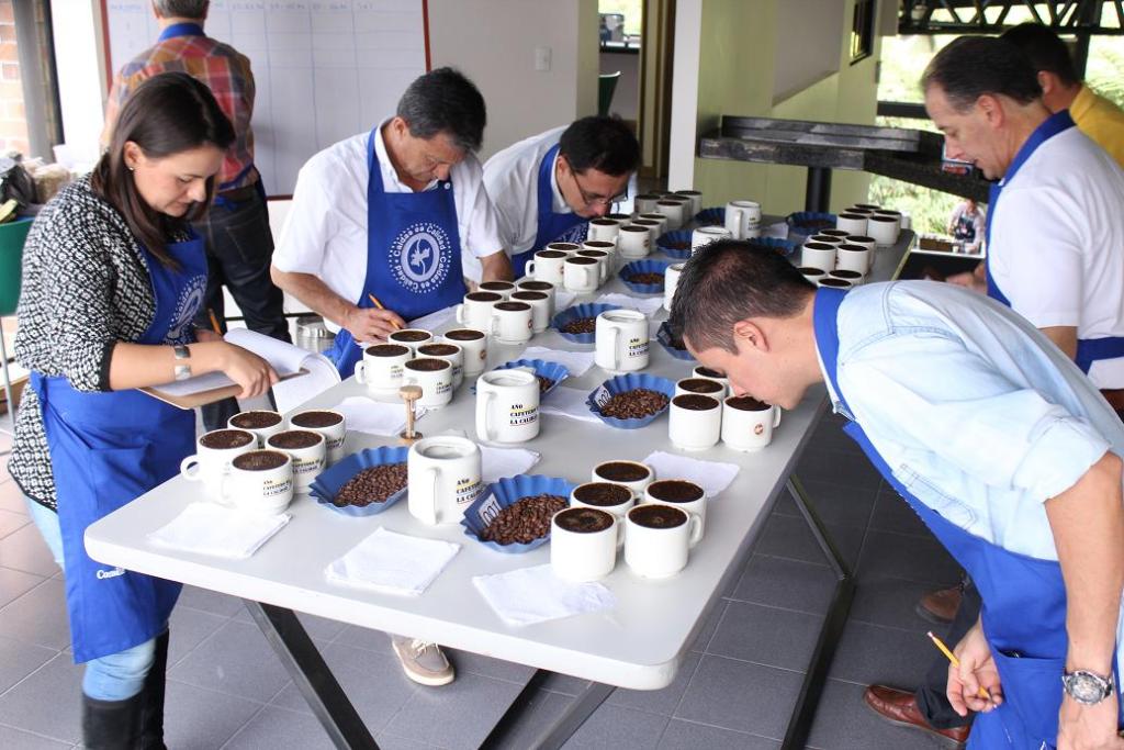 Panel de cata. Catadores calificando el Aroma del café.