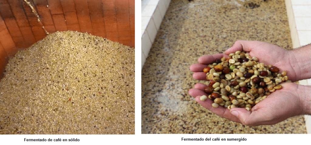 Almendras de café dentro de tanques de fermentación.