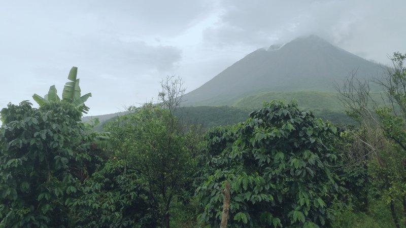 Paisaje cafetero en la isla de Sumatra
