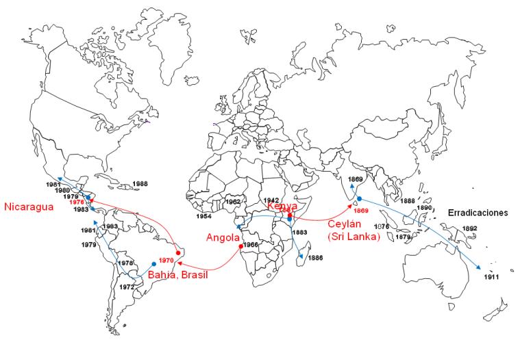 Mapa que muestra la manera como se diseminó la roya del café por todo el mundo.