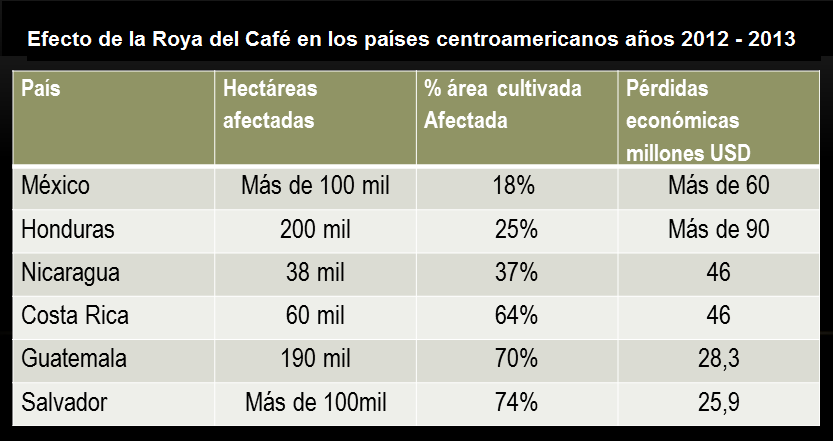 Tabla que muestra las pérdidas económicas ocasionadas por roya del café en los países centroamericanos durante los años 2012 y 2013.