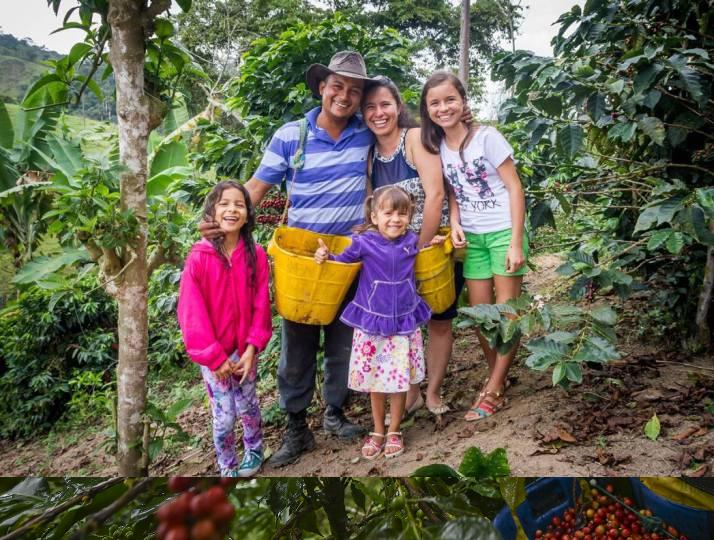 Familia cafetera recolectando  cosecha de café con su propia mano de obra. Asi se previene el contagio por COVID-19 en la finca cafetera..