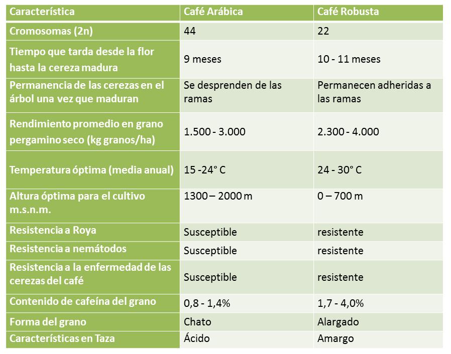 Tabla que muestra las diferencias entre Coffea arabica y Coffea canephora var Robusta.