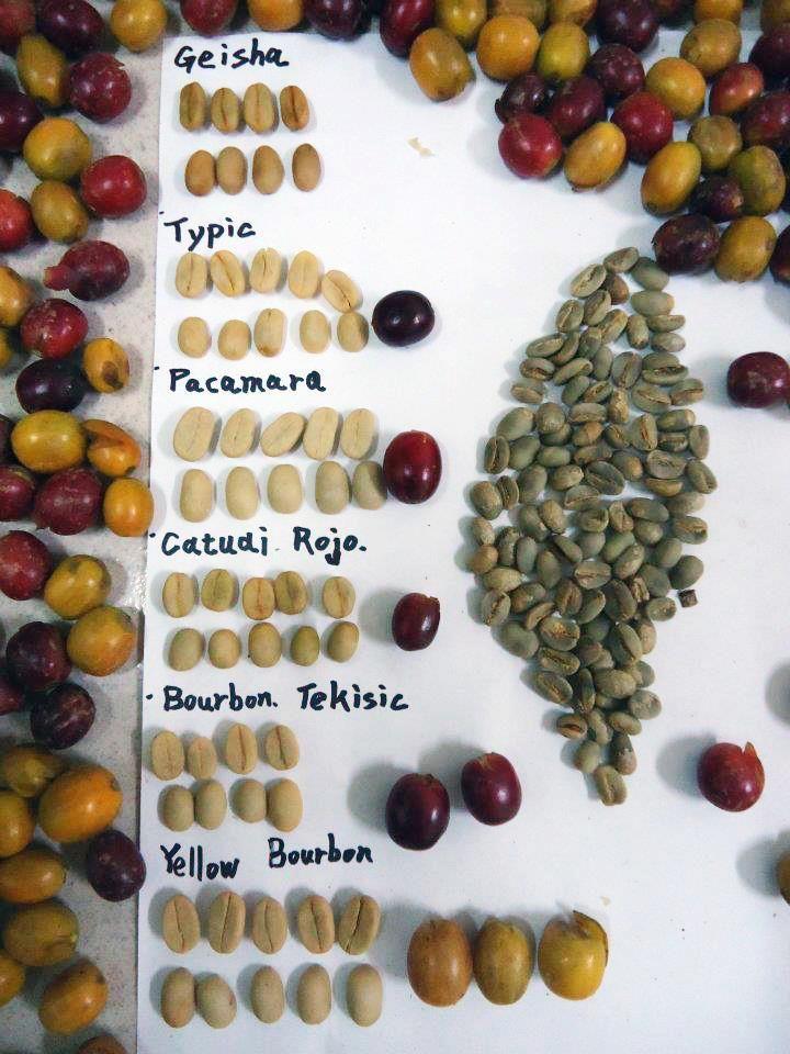 Granos de café de diferentes variedades