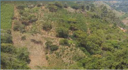 Erosión laminar en cultivos de café